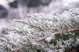 Cerchio sciamanico Solstizio d'Inverno @ Istituto di Crescita PErsonale la Rinascita dell'Essere | Pieve Emanuele | Lombardia | Italia