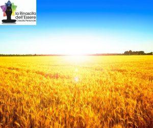 Solstizio d'estate: apri la porta alla prosperità @ Mitropa Music All